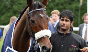 Cue-Card-Horse-Racing-Gold-Cup